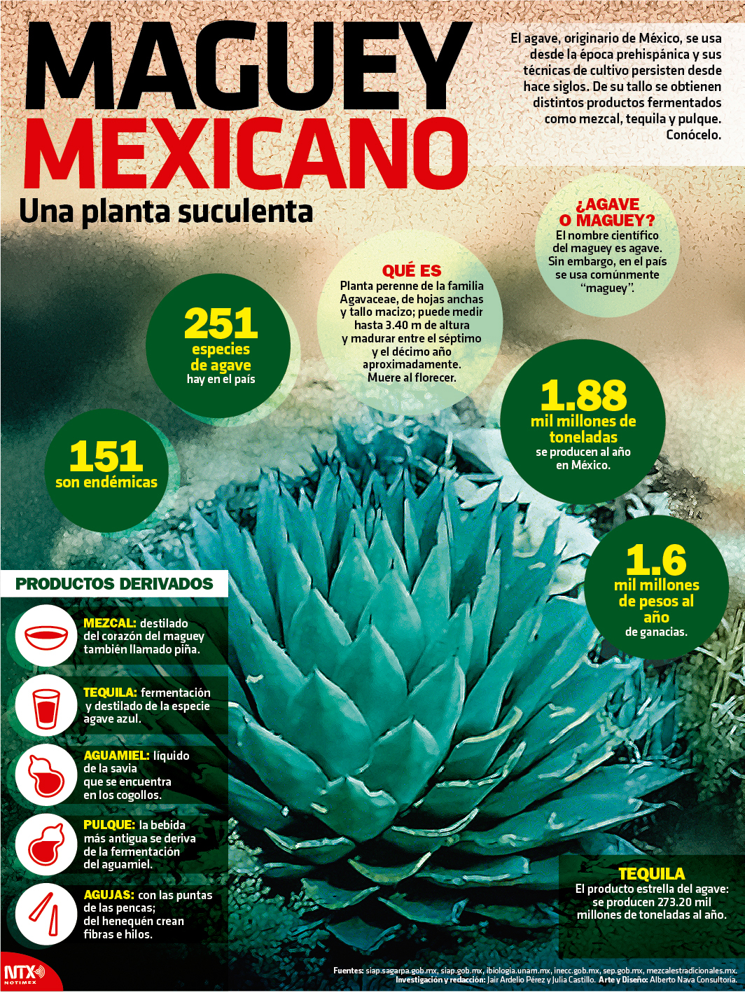 Maguey mexicano