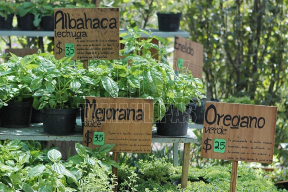 Hoy tamaulipas crean jardin para la conservacion de for Jardin botanico medicinal