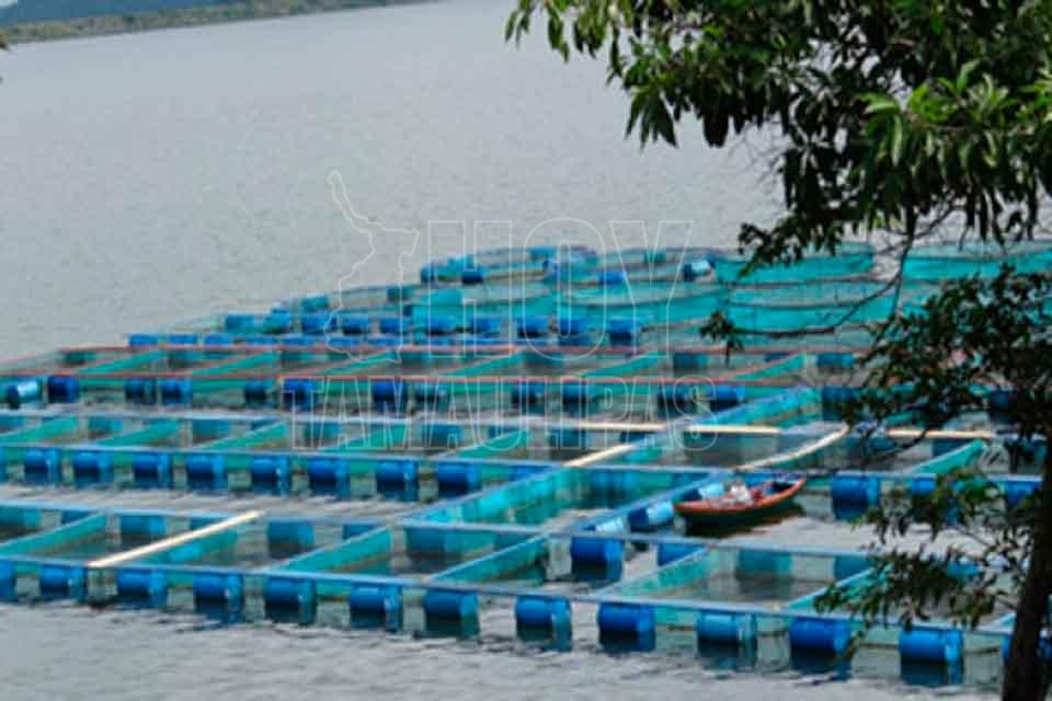 Hoy tamaulipas incrementa oaxaca jaulas flotantes para for Jaulas flotantes para piscicultura