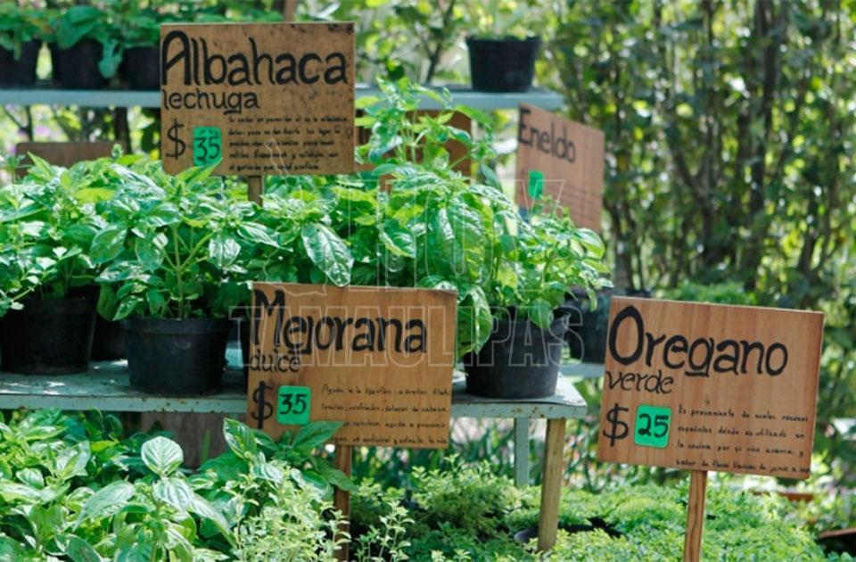 Hoy tamaulipas abre sus puertas jardin medicinal de la for Jardin xel ha
