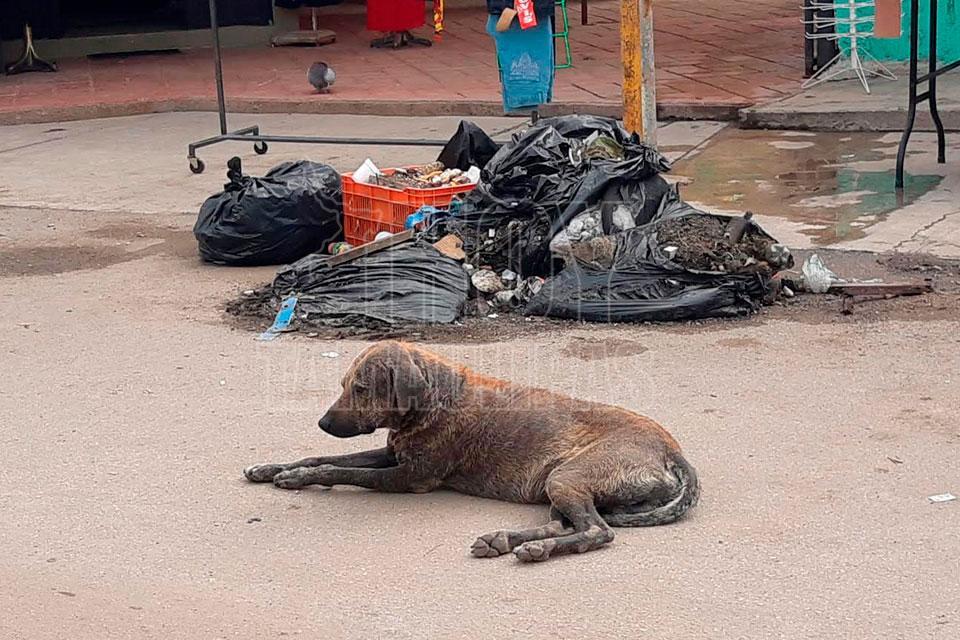 Proyectan construir una perrera en Altamira - Hoy Tamaulipas