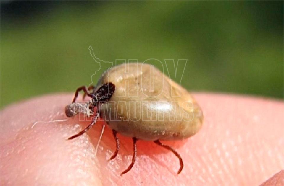 enfermedades mas comunes transmitidas por vectores